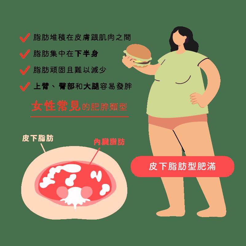 消脂點滴-內臟脂肪皮下脂肪比較女性