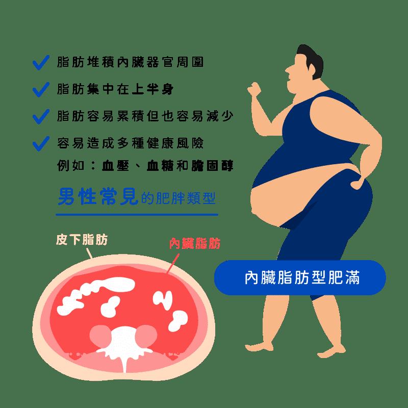 消脂點滴-內臟脂肪皮下脂肪比較男性