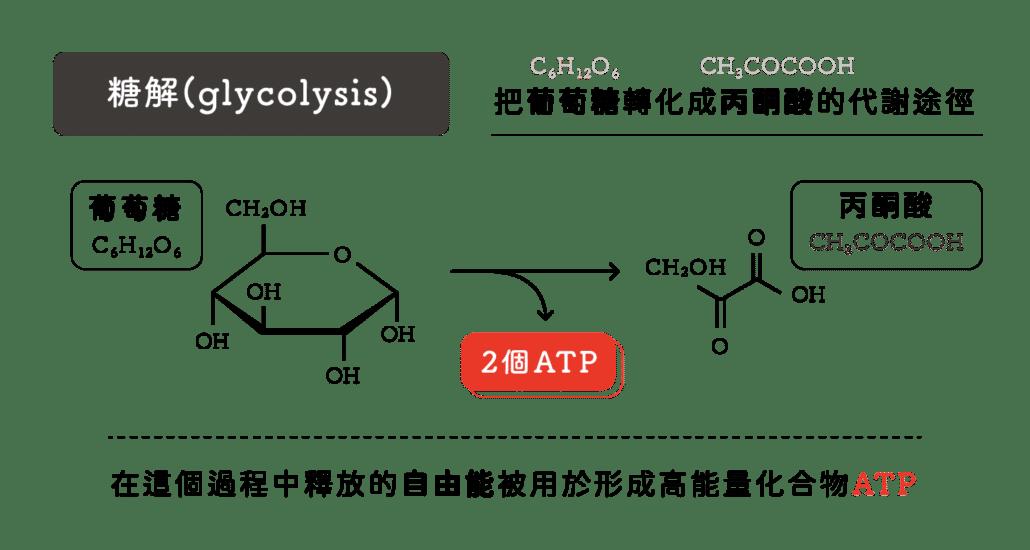 消脂點滴葡萄糖轉化機制