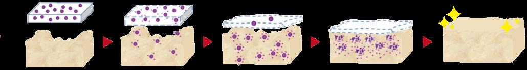 異體真皮粉整合機制
