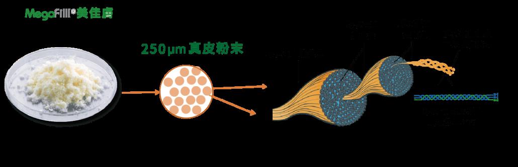異體真皮粉結構成分