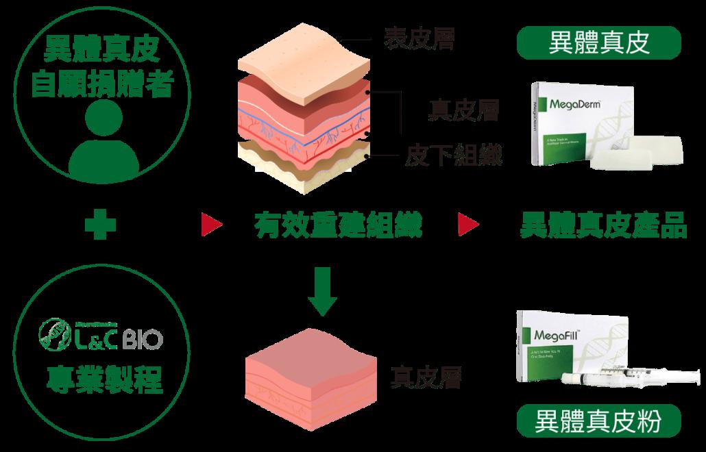 異體真皮粉經由專業製成變成相關產品