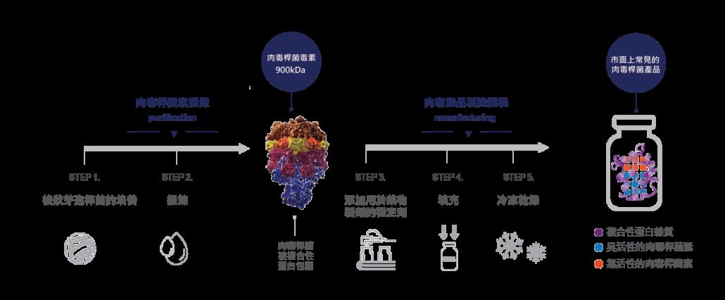 一般肉毒桿菌素製造過程